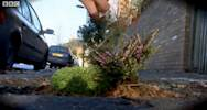Artist turns potholes into mini gardens image