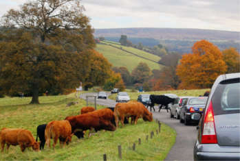 Traffic increases with ongoing rural rise image